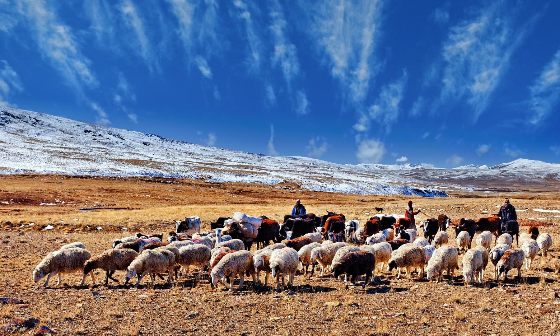 Nomads of Deosai