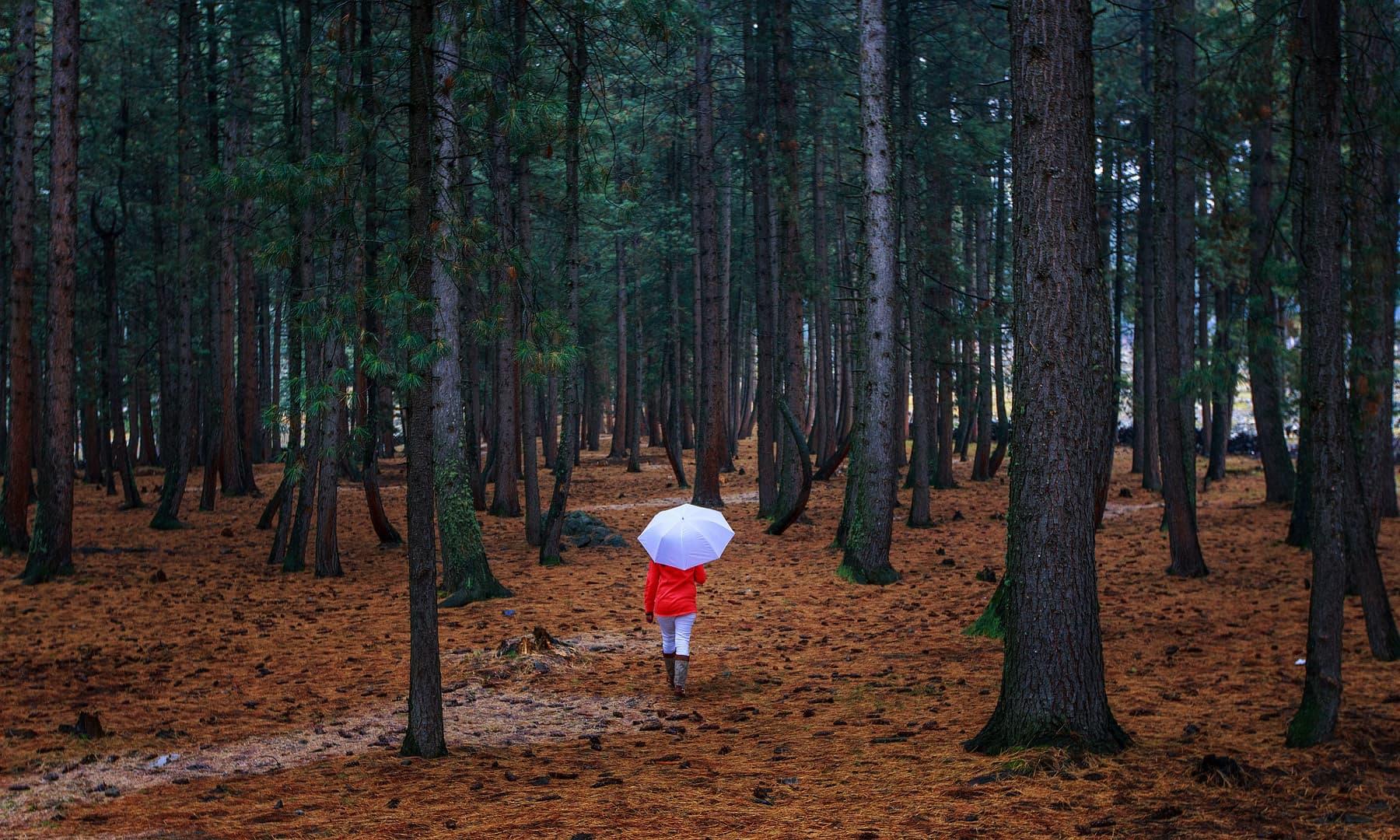نلتر کا جنگل — فوٹو سید مہدی بخاری