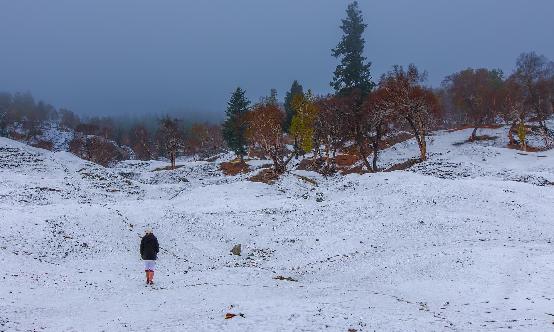 نلتر کی پہلی برفباری — فوٹو سید مہدی بخاری