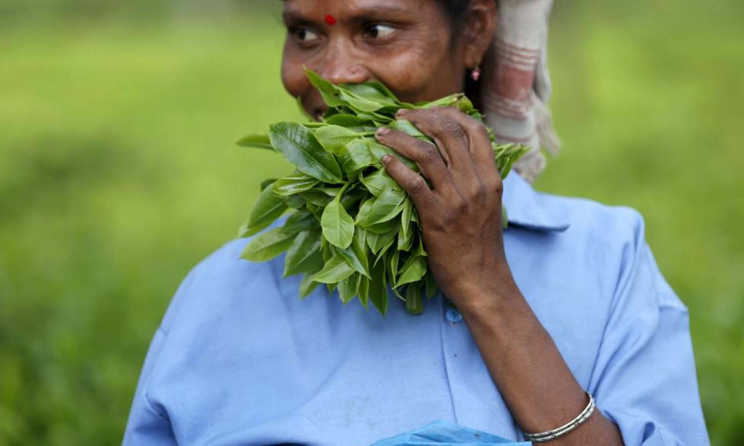A tea garden worker holds a bunch of plucked tea leaves inside Aideobarie Tea Estate in Jorhat in Assam,. — Reuters