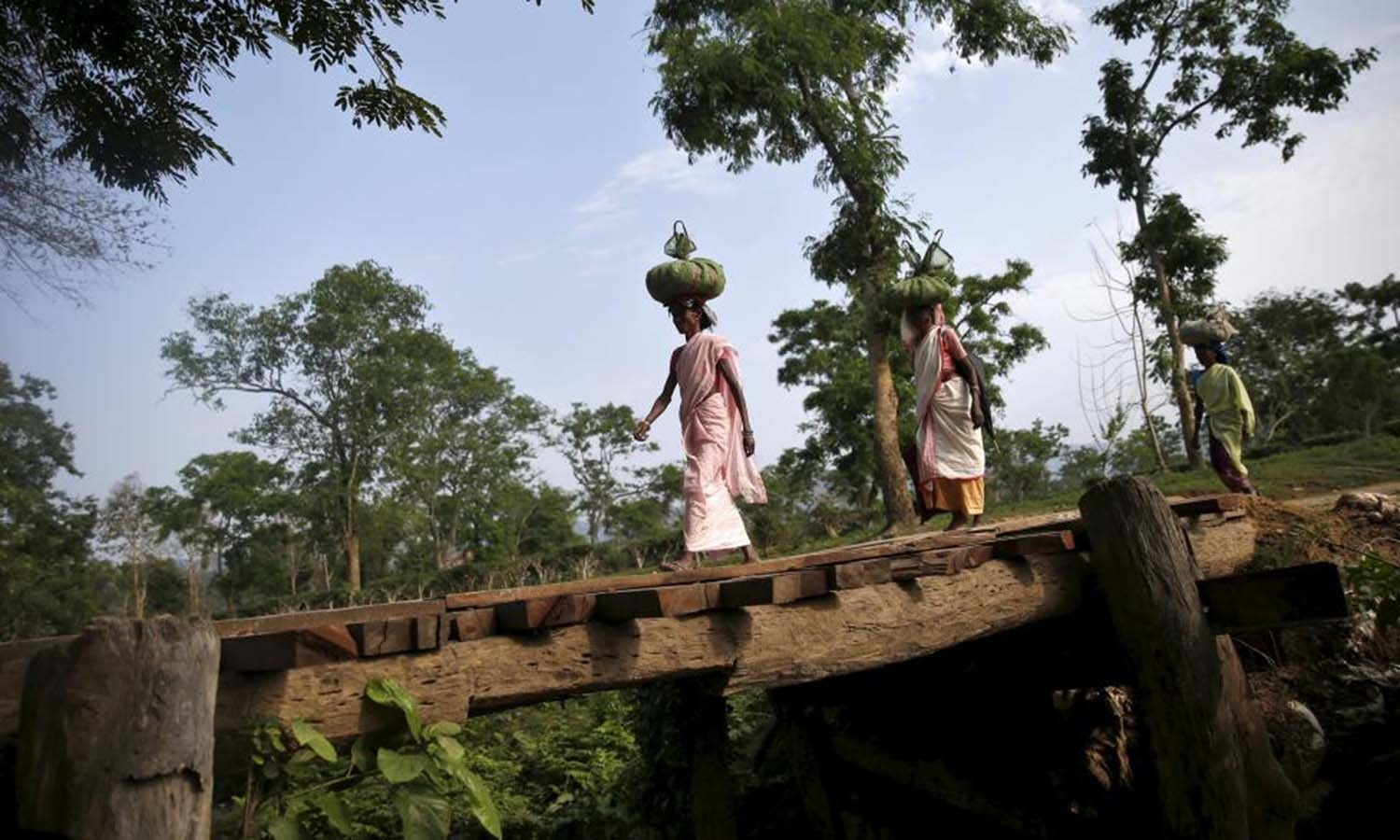 Tea garden workers carrying tea leaves over their heads after plucking them from a tea estate, walk at Jorhat in Assam. — Reuters