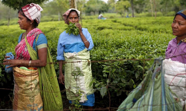 Tea garden workers take a break from plucking tea leaves inside Aideobarie Tea Estate in Jorhat.  — Reuters