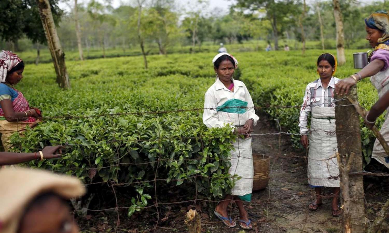 Tea garden workers take a tea break from plucking tea leaves inside Aideobarie Tea Estate in Jorhat in Assam. — Reuters