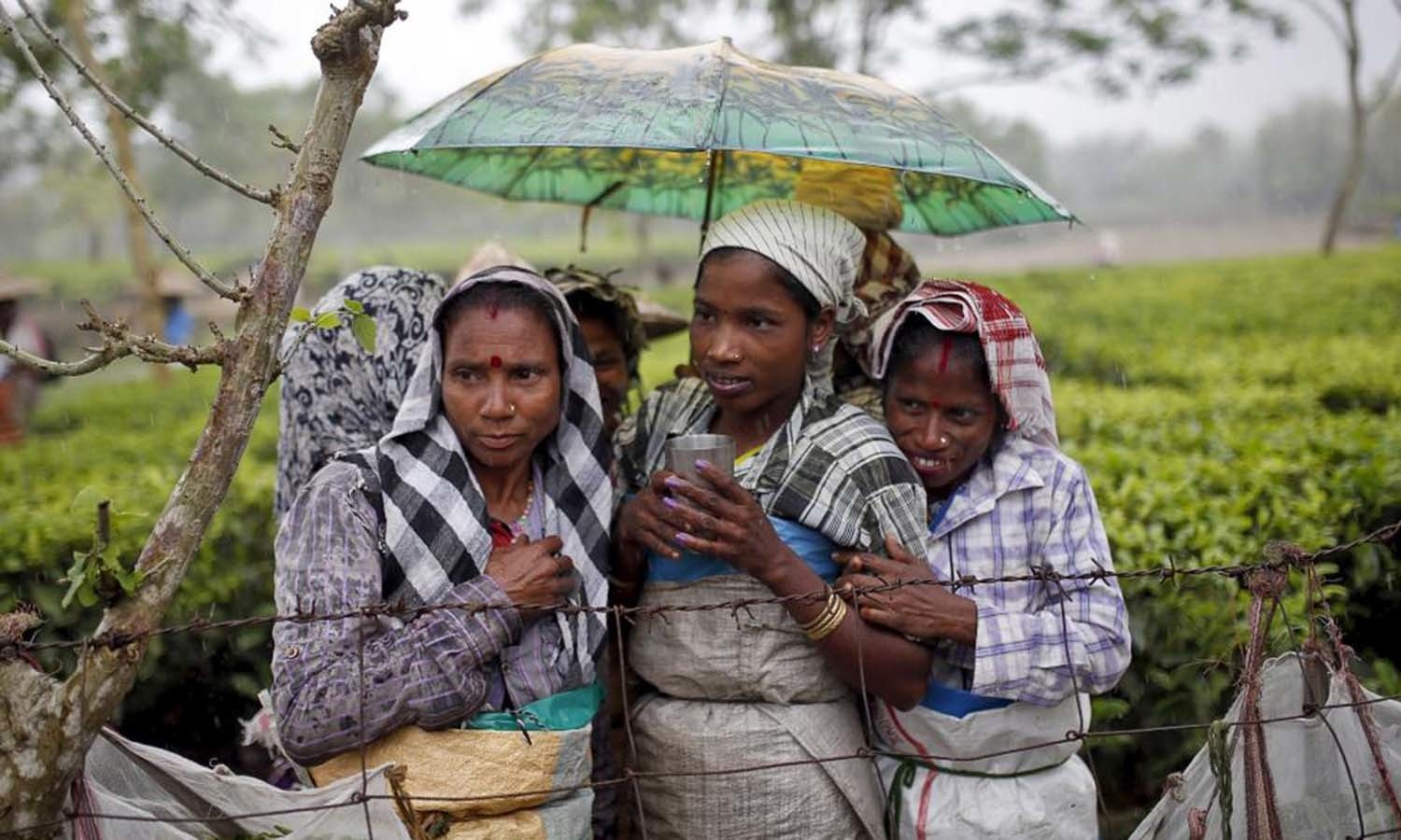 Tea garden workers huddle under an umbrella as they wait for the rain to stop to resume their work inside Aideobarie Tea Estate in Jorhat in Assam. — Reuters