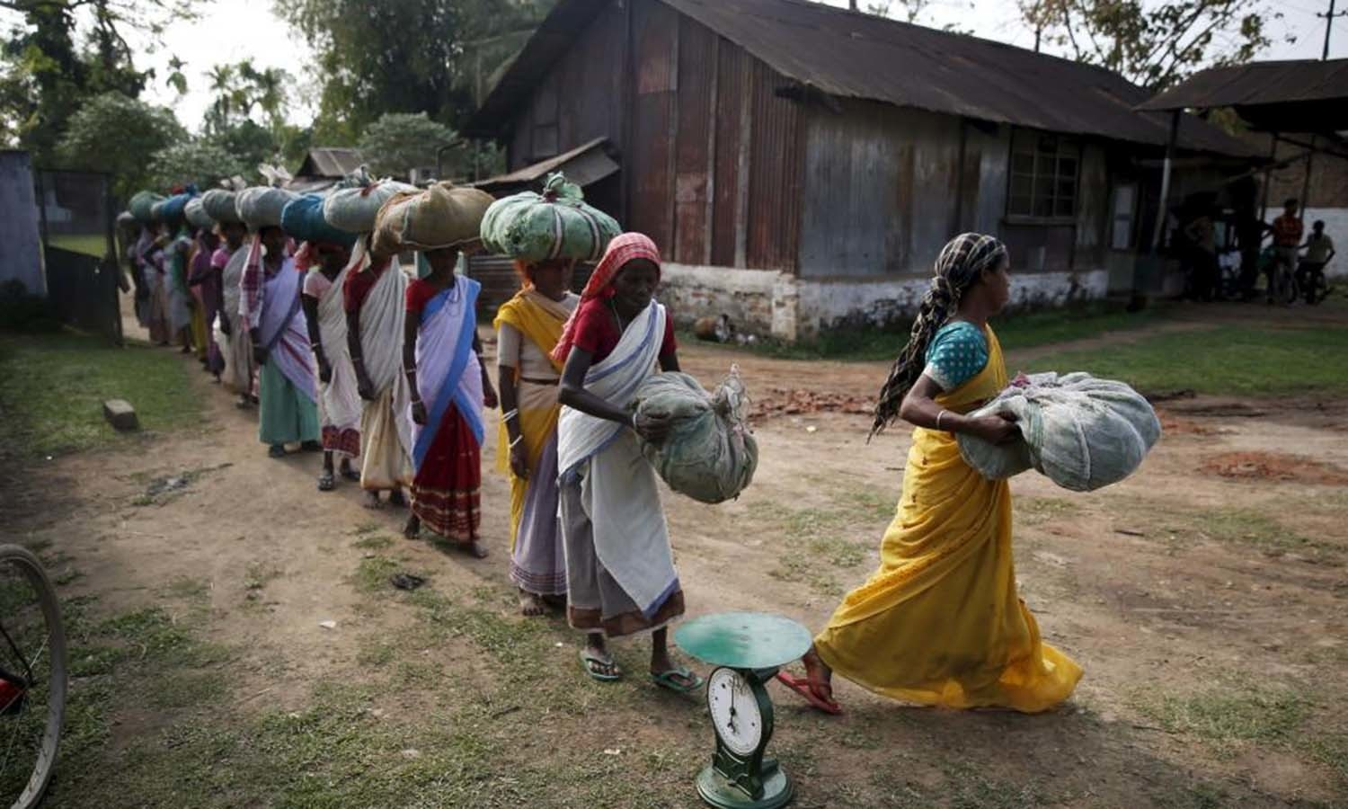 Tea garden workers arrive to weigh tea leaves after plucking them from a tea estate in Jorhat in Assam,. — Reuters