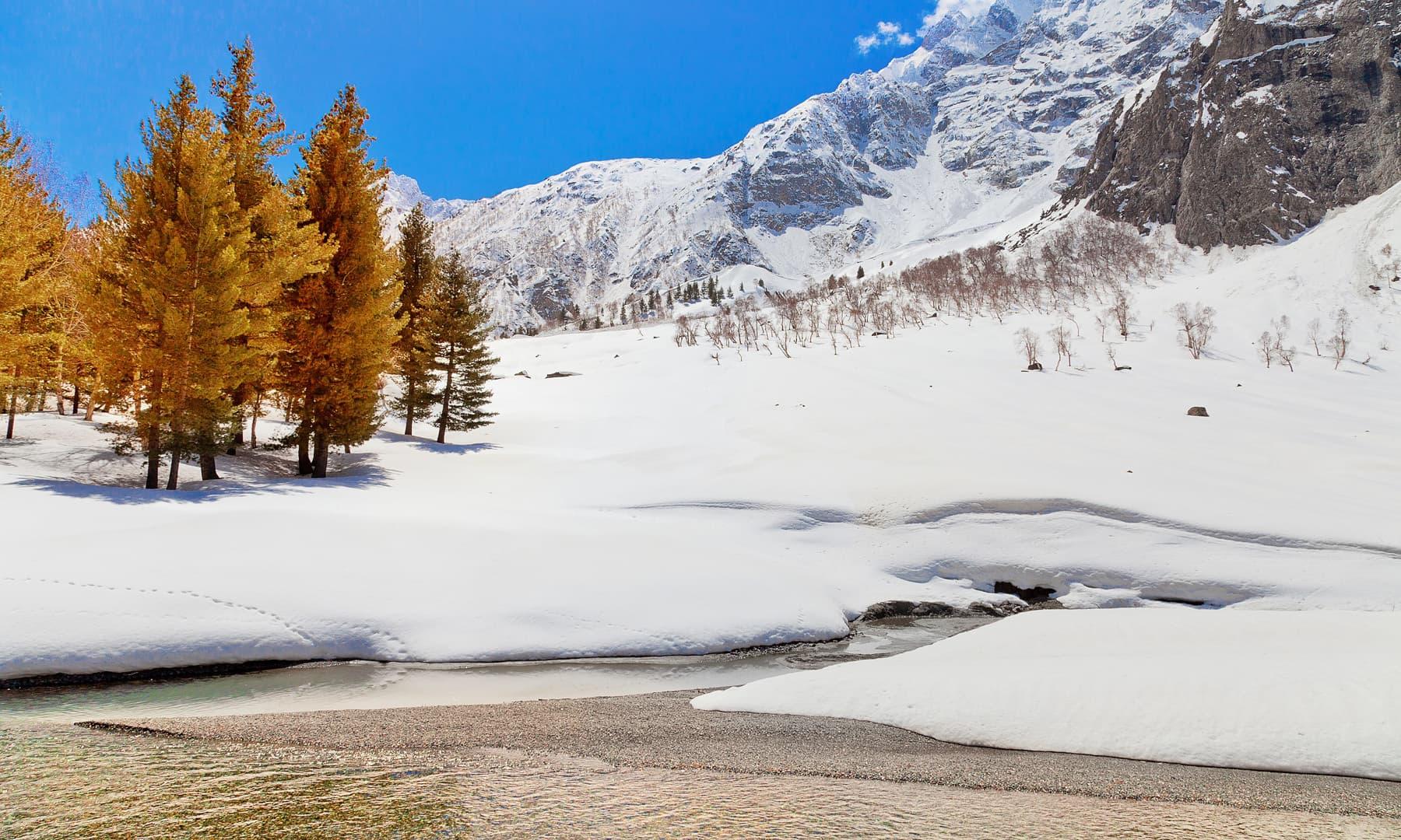 Naltar in winter. — Syed Mehdi Bukhari