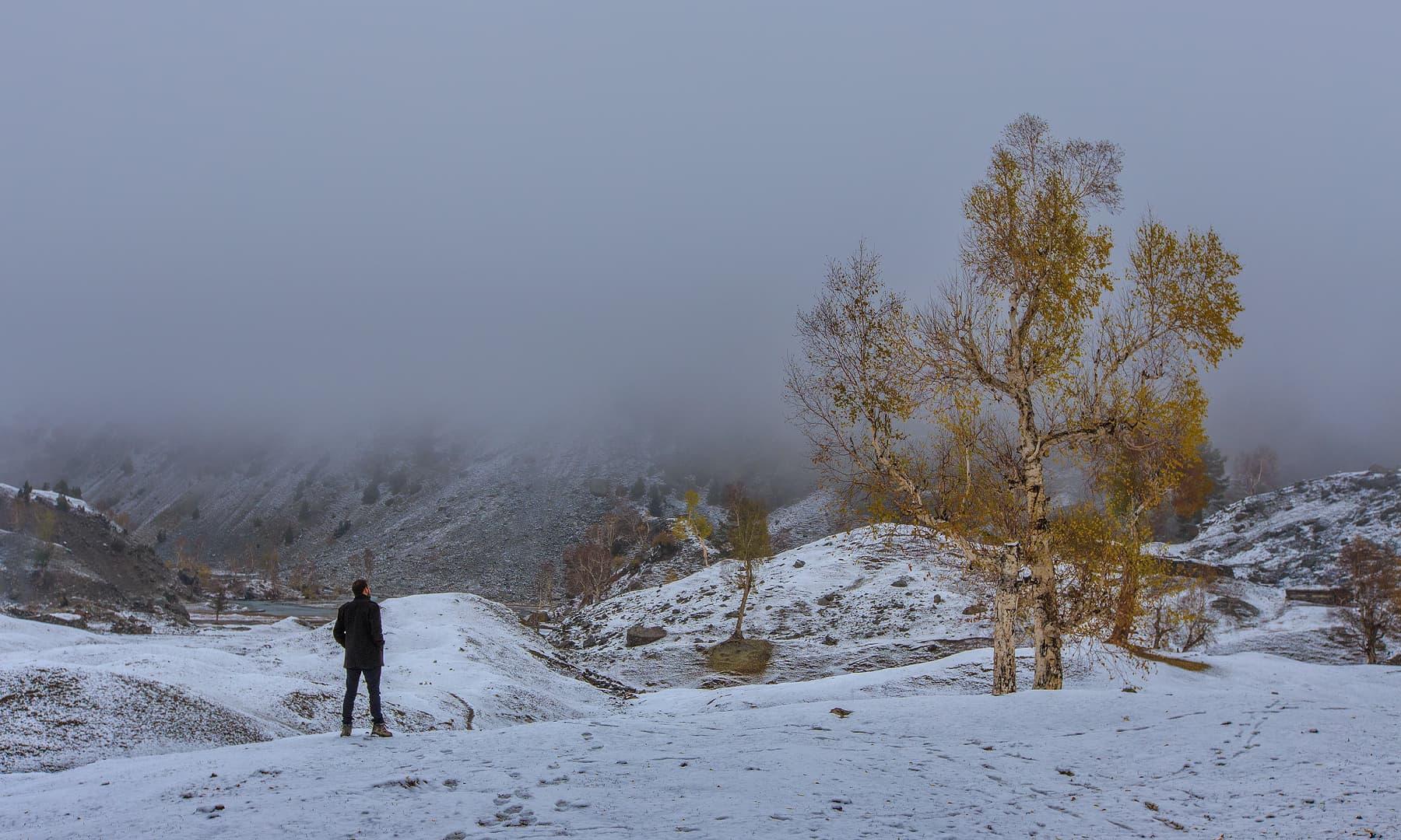 Towards Naltar lake. — Syed Mehdi Bukhari