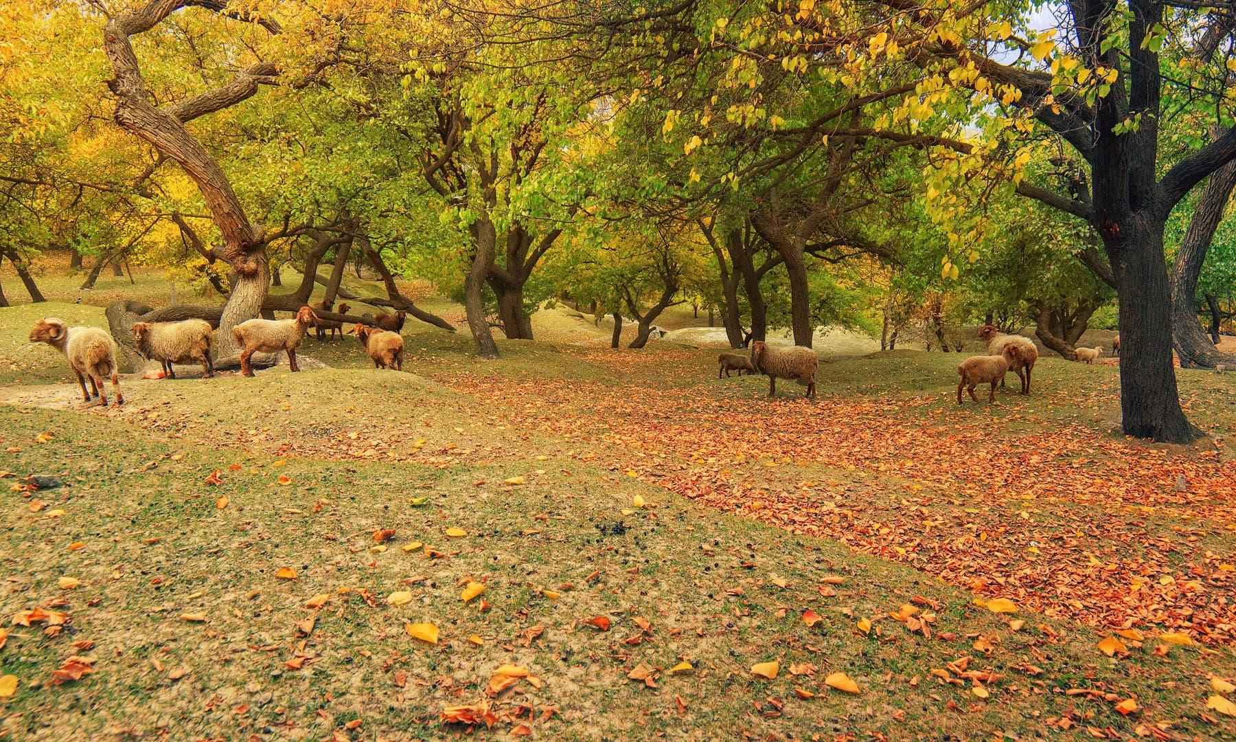 نگر — فوٹو سید مہدی بخاری