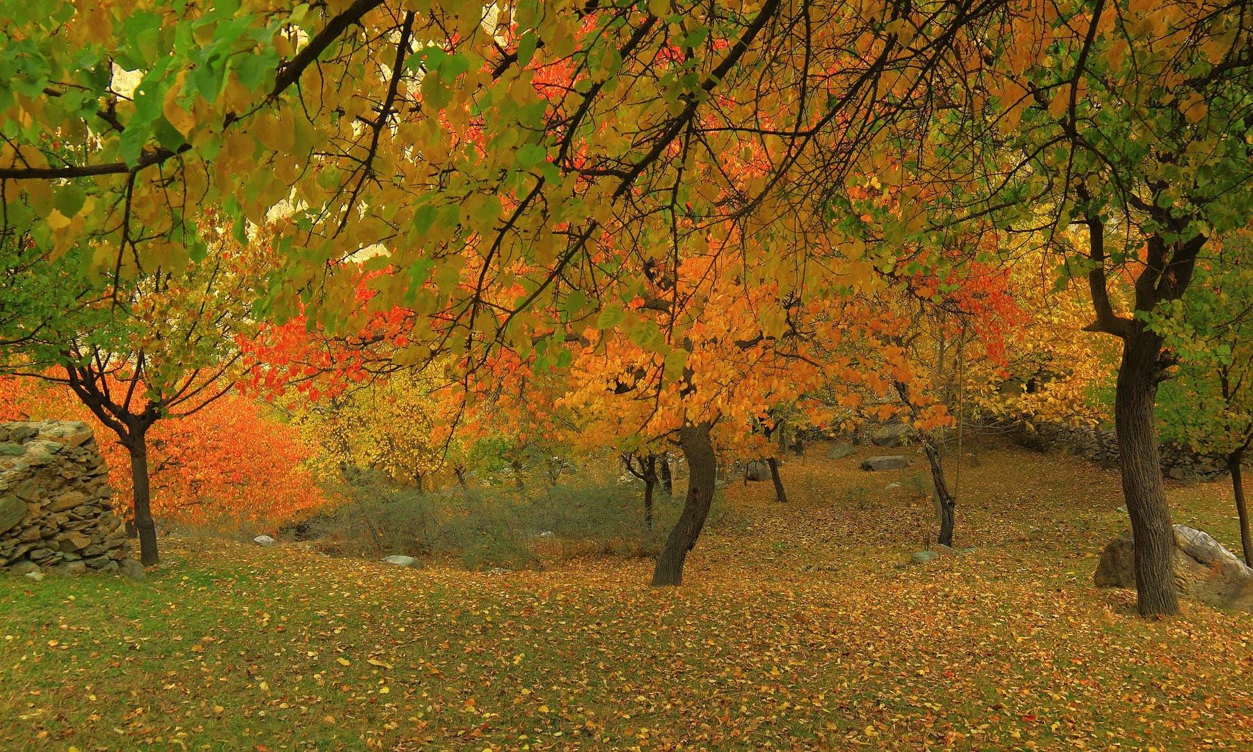 Autumn in Hisper.