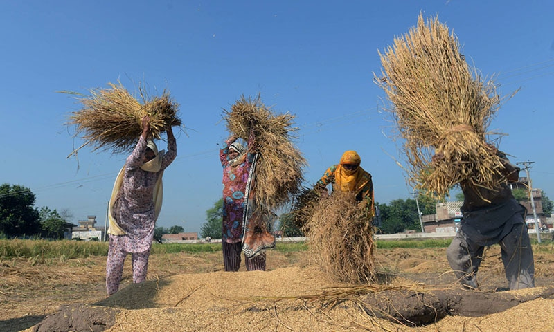 Women work on agricultural land in Lahore | AFP