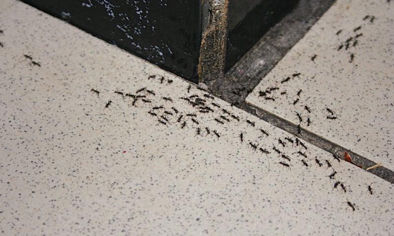 De Bug Your House Newspaper Dawn Com