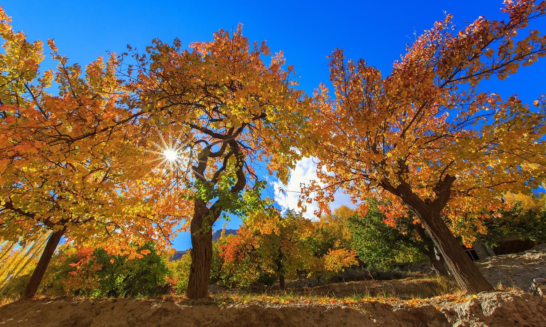 Autumn at Khunjerab.