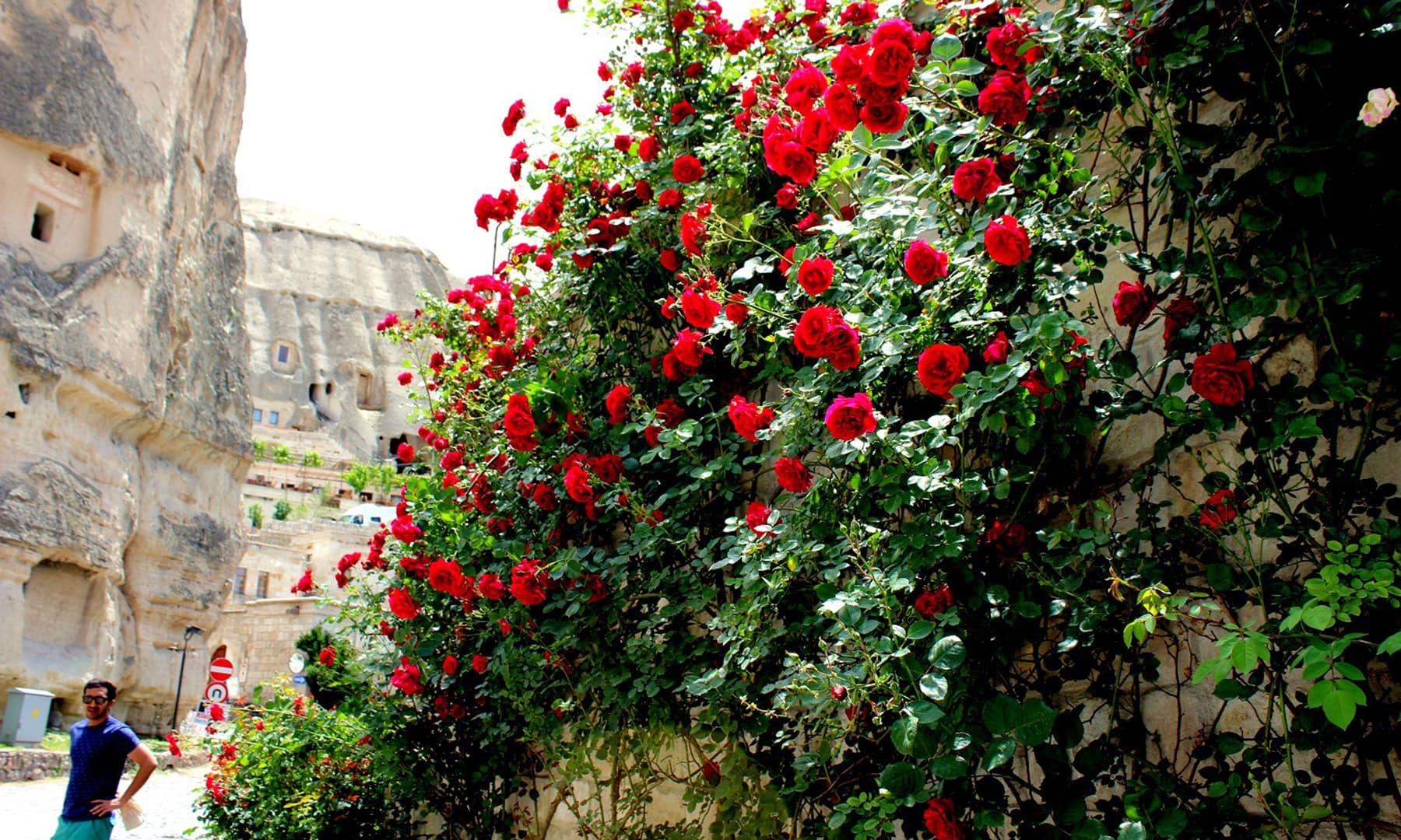 Roses grew everywhere.