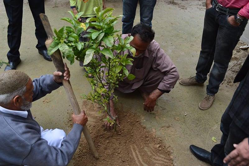 پودا لگایا جا رہا ہے۔