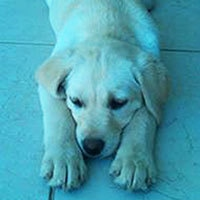 Milli as a puppy.
