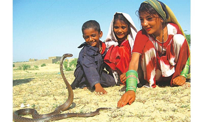 Barefooted children of Jogi Daro Colony play with snakes and other reptiles instead of toys