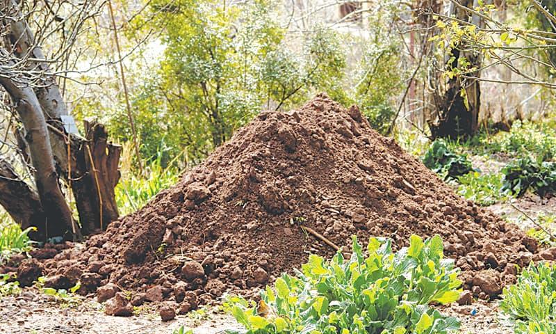 how to kill termites in soil