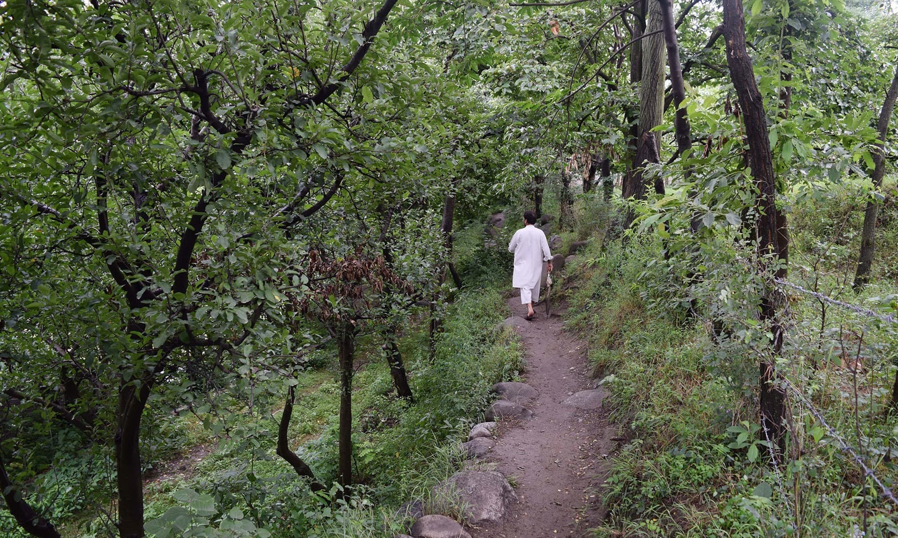A path between apple orchards leading to river.