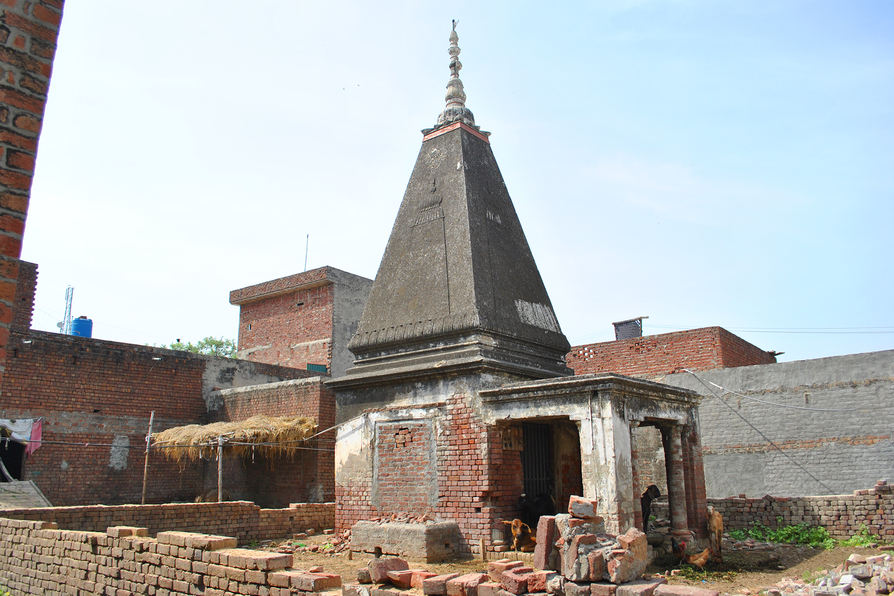 The temples are being used as cattle yards.