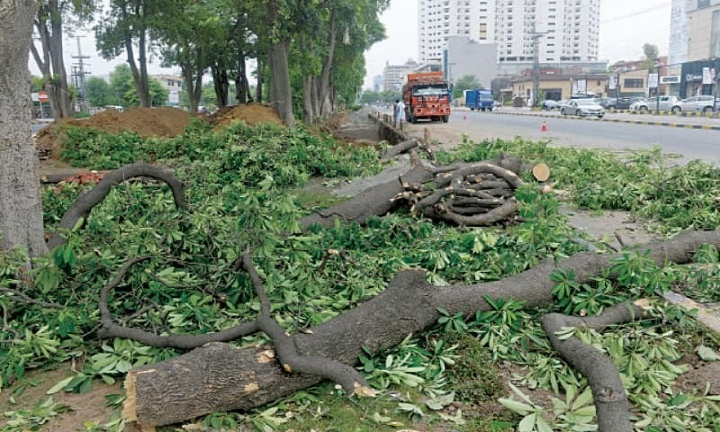 Trees being felled from Gulberg Main Boulevard to make way for the signal-free corridor project | White Star