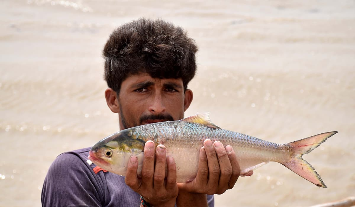 A fisherman shows a freshly caught palla. -Photo by author