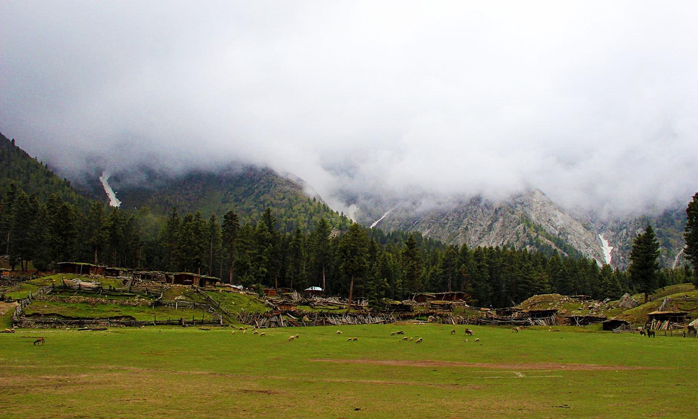 The cricket ground.