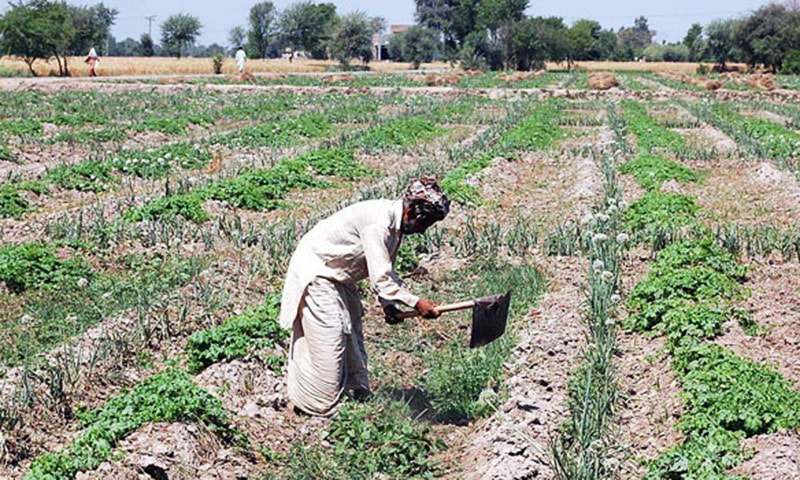 The package of incentives announced by the prime minister for small farmers is a welcome development.—AP/File