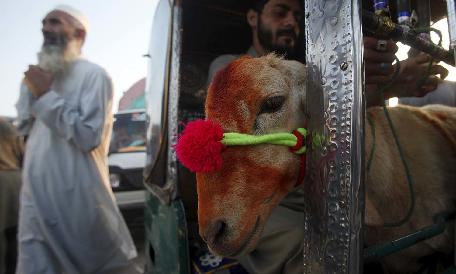 A man takes a decorated sacrificial sheep to his home after buying it in a local market in Peshawar. — Reuters
