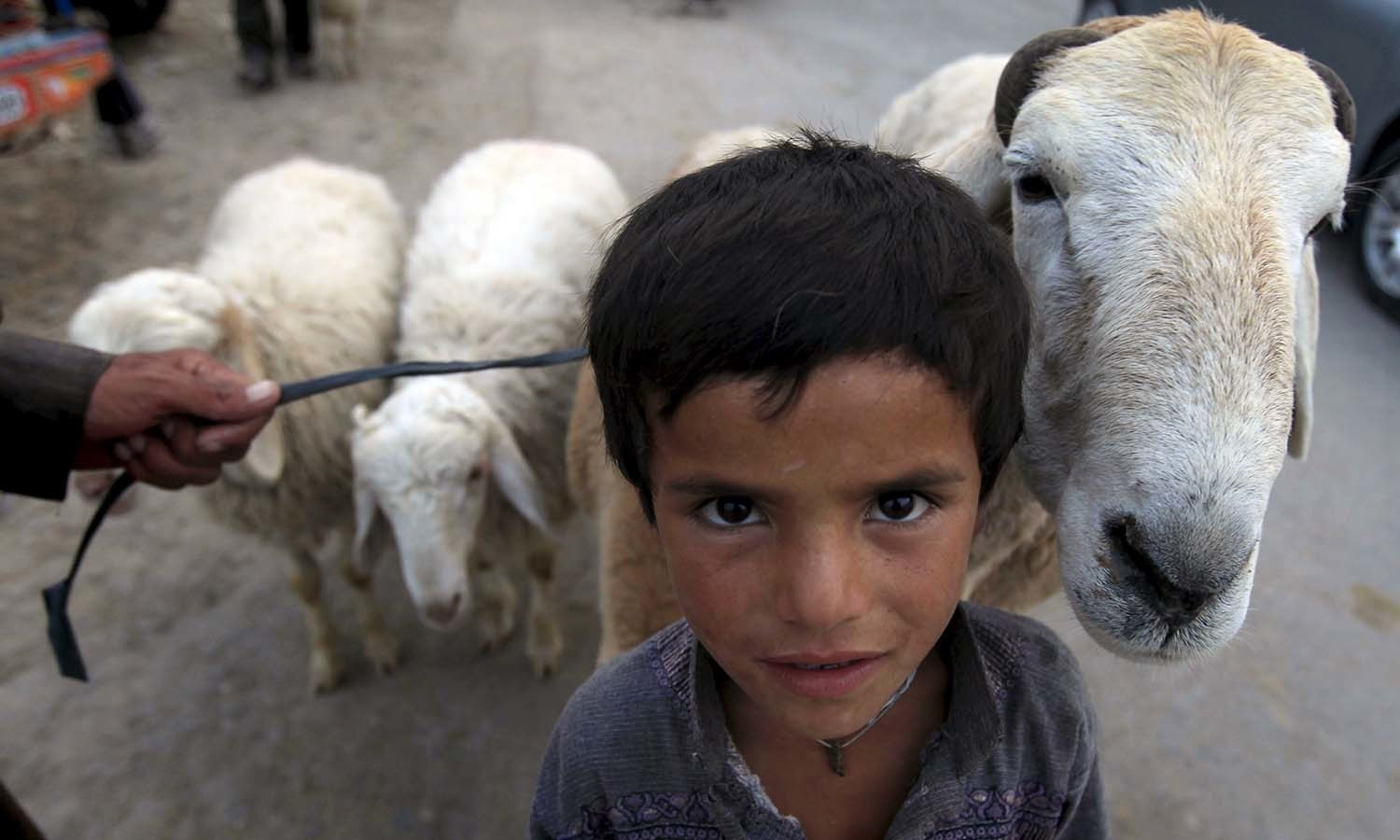 A boy poses with his sheep at an animal market in Islamabad. ─ Reuters