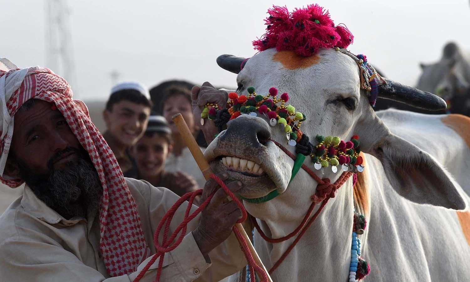A seller shows the teeth of a cow at a livestock market ahead of the sacrificial Eidul Azha festival in Quetta. — AFP