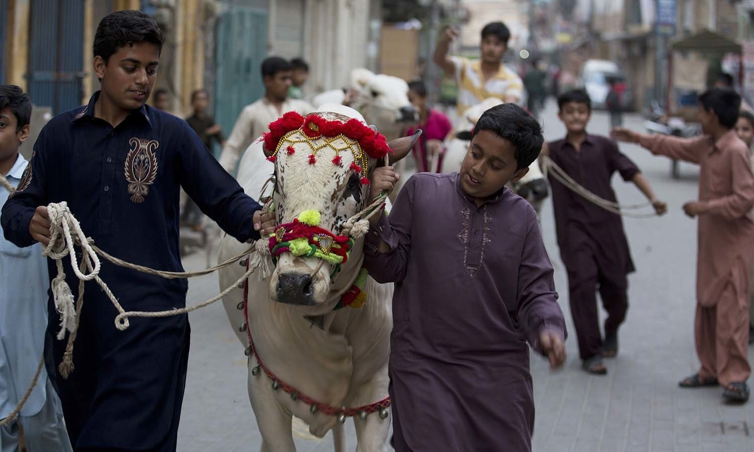 Children escort their animals bought ahead of Eidul Azha in Rawalpindi. — AP