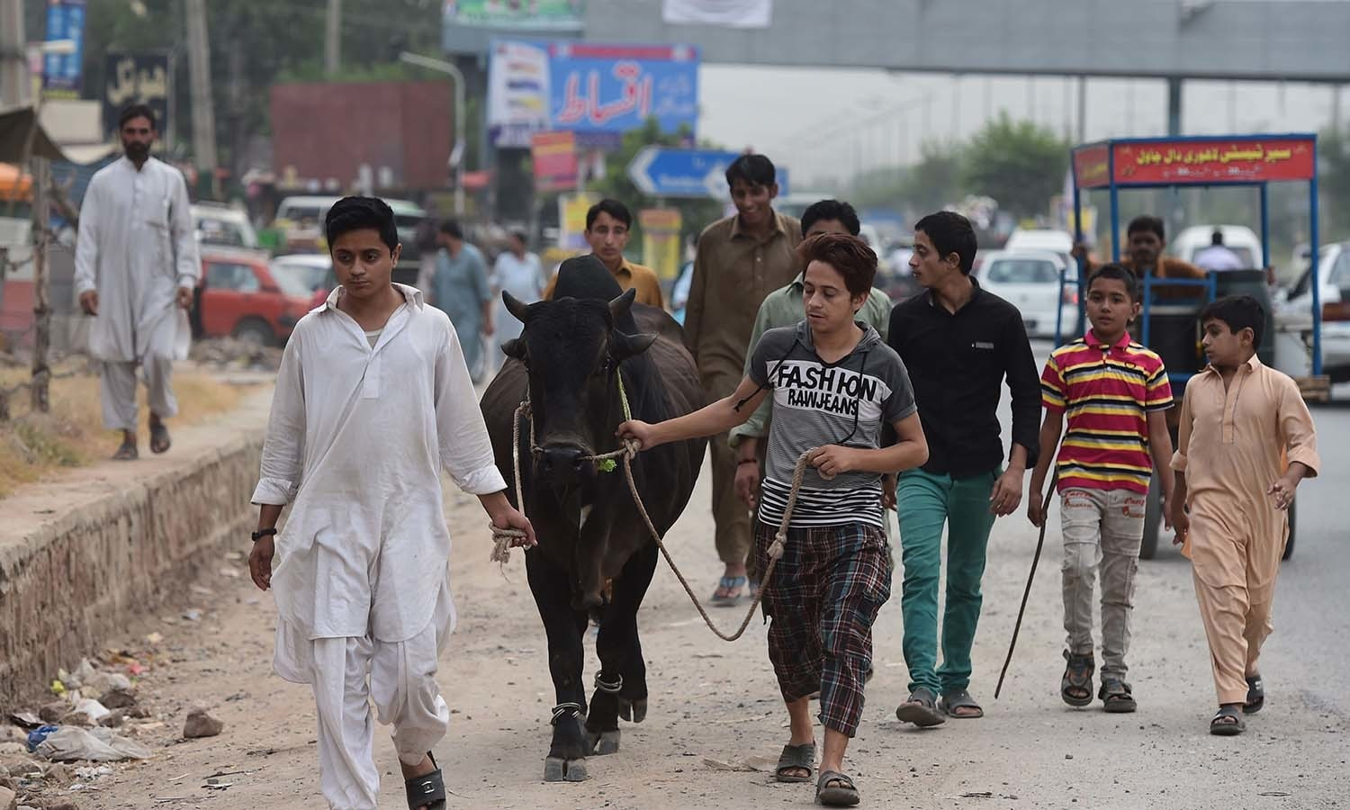 Youth lead a cow through the streets of Rawalpindi. — AFP