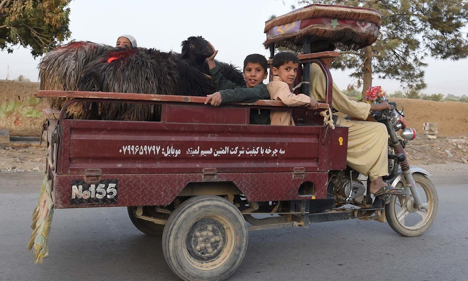 A man transports sheep ahead of the sacrificial Eidul Azha festival in Quetta. — AFP