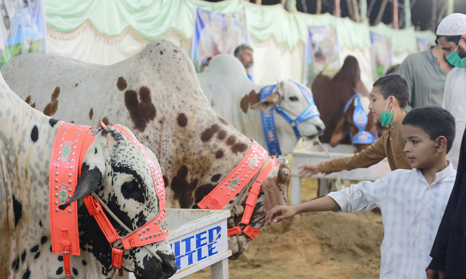 Children pet the cattle at the market. —Yumna Rafi