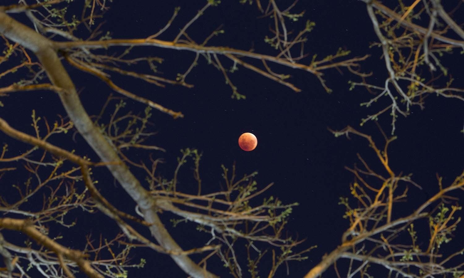 """The so-called """"supermoon"""" is seen through branches of a tree during a lunar eclipse in Buenos Aires, Argentina. — AP"""