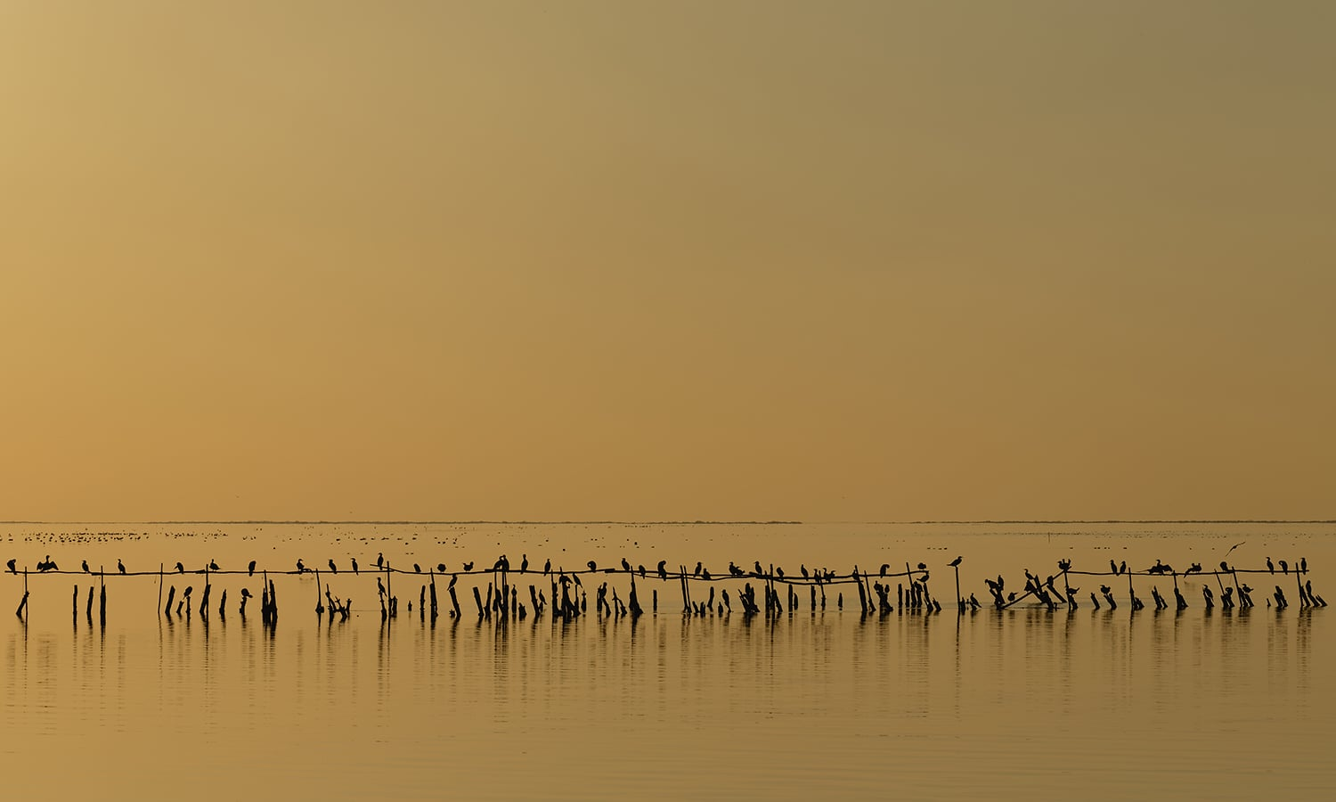 Eight place: cormorants at dusk on the pond of Vaccarès, France. — Photo by Ddeveze,