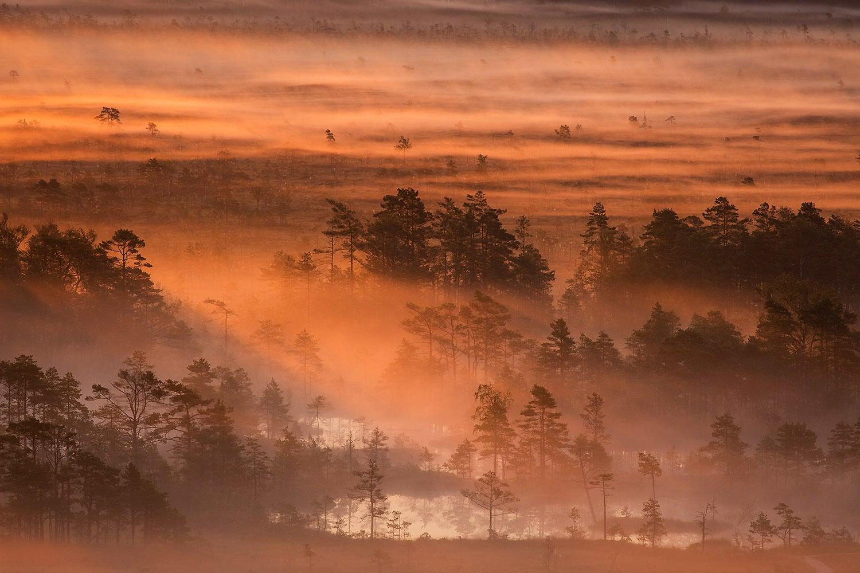 Fourteenth place: Morning in Tolkuse bog, Luitemaa Nature Conservation Area, Pärnu County, Estonia. — Photo by Märt Kose