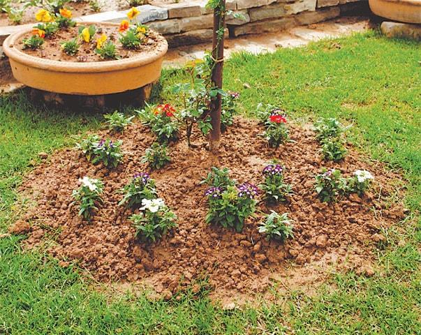 Mound planting