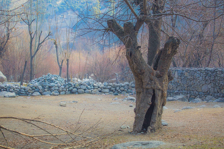 A barren tree.