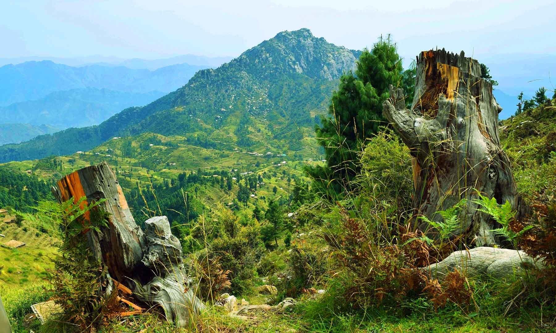 درختوں کی غیر قانونی کٹائی کا ایک اور منظر۔