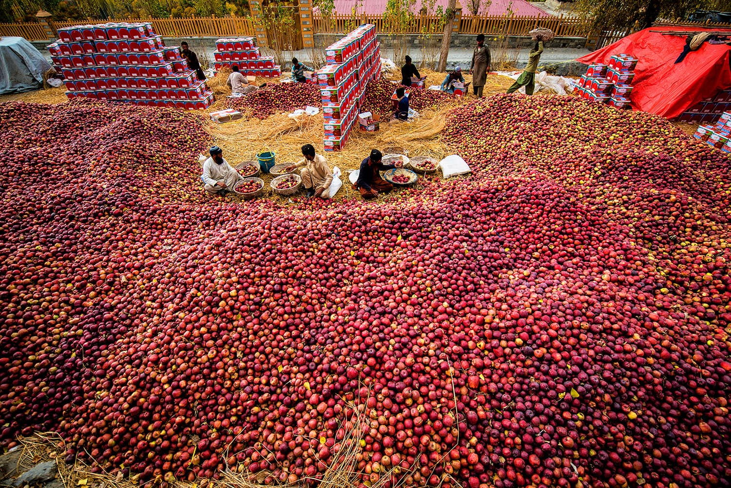 Apples of Hunza.