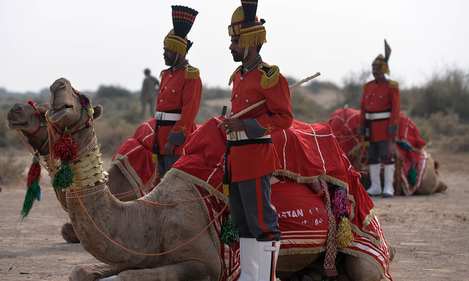 In this photograph taken on November 13, 2015, band members of Pakistan Desert Rangers, stand with their camels before a march in Moj Garh, some 100 kilometres east of Bahawalpur in Punjab province. —AFP