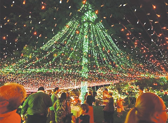 Canberra: A man kicks off Christmas celebrations in Australia's capital by  earning a Guinness World - Australian Christmas Tree Sets Record With 518,838 Lights
