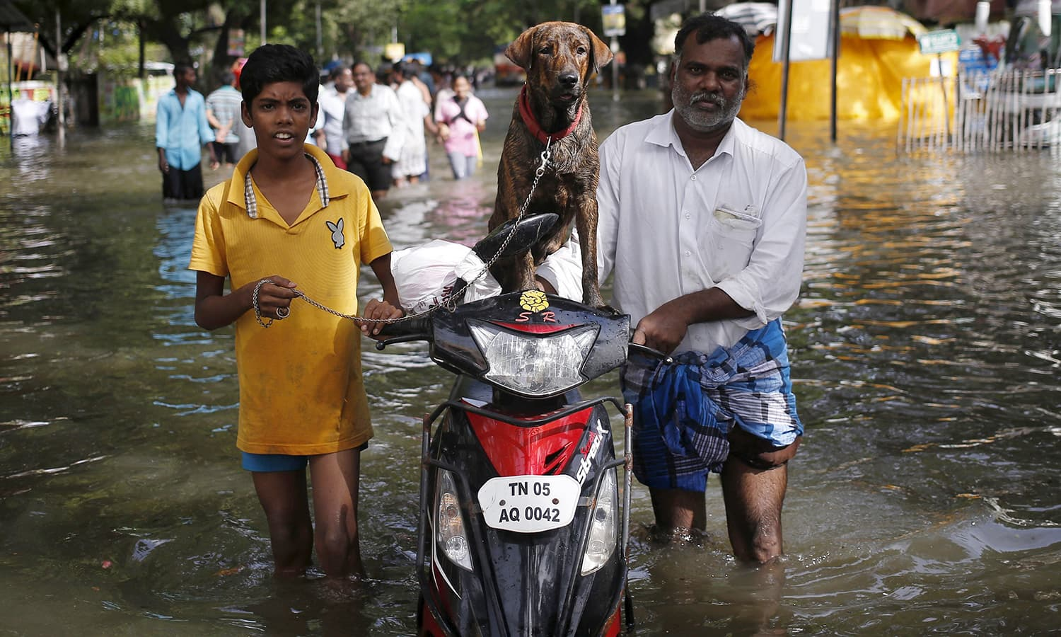 Residents along with a dog evacuate a locality as they wade through a flooded street in Chennai, India, December 3, 2015. — Reuters