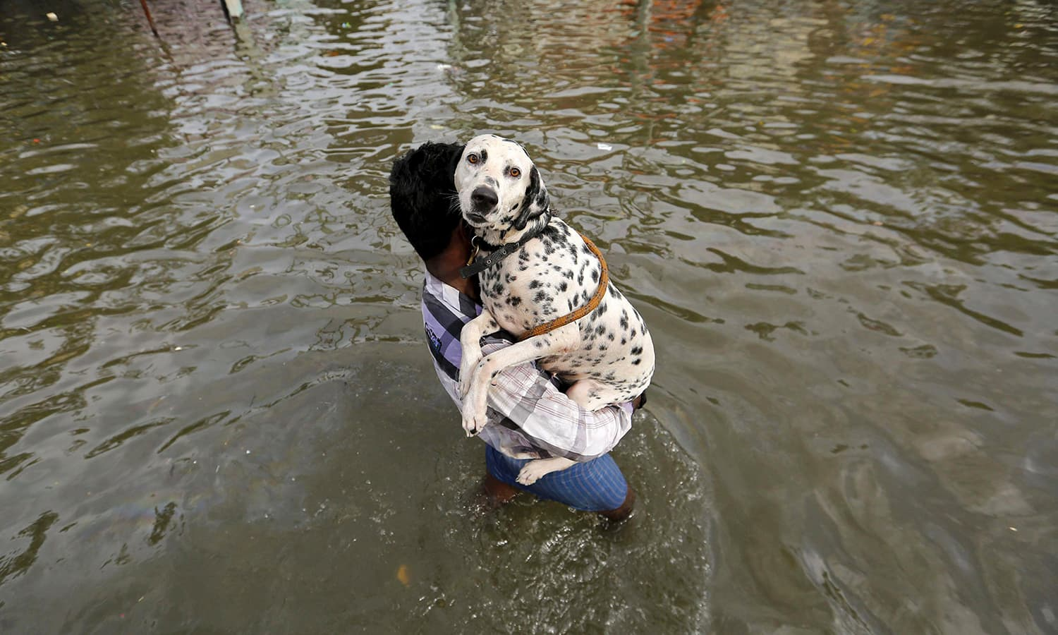 A man carries a dog as he wades through a flooded street in Chennai, in the southern state of Tamil Nadu, India, December 3, 2015.  — Reuters