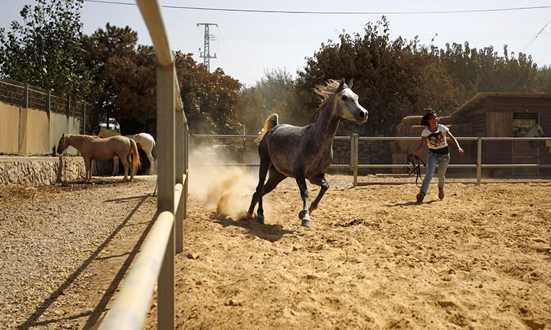 Horses are an important part of the culture in the region's ranches and cattle farms. ─ AFP