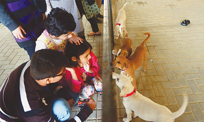Visitors to the newly-opened ACF Animal Shelter make friends with some abandoned puppies on Sunday.—Fahim Siddiqi / White Star