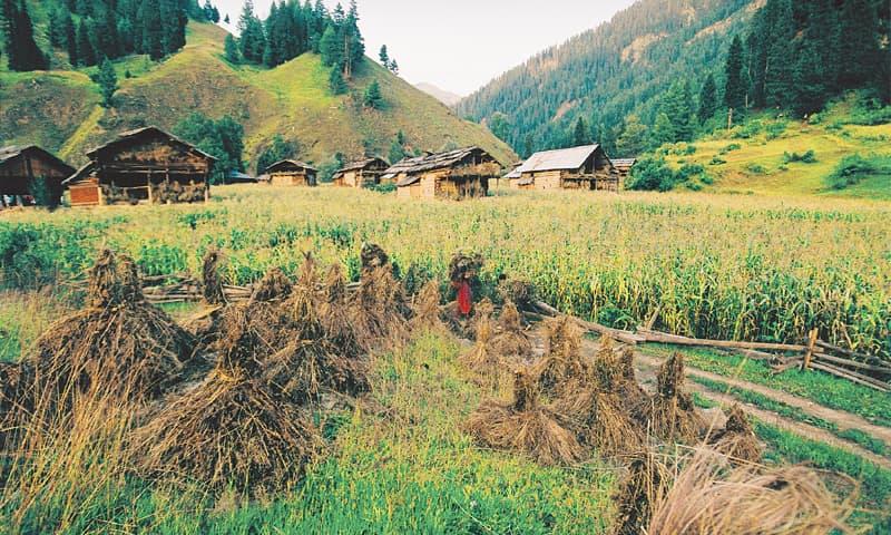 Picture-pretty Neelum Valley, Azad Kashmir. — Arif Mahmood / White Star