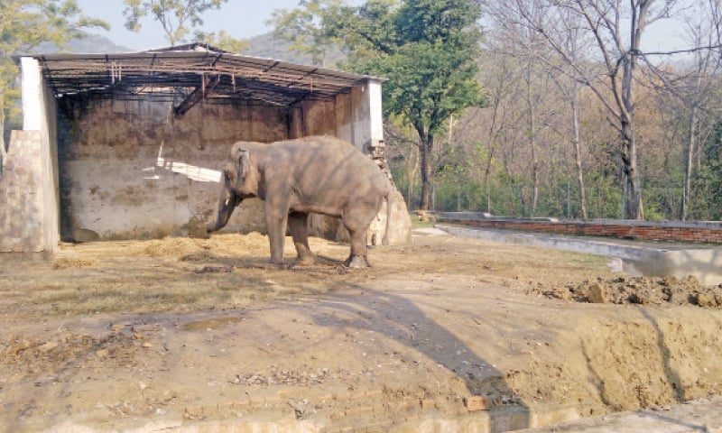 Kaavan — Marghazar Zoo's only attraction