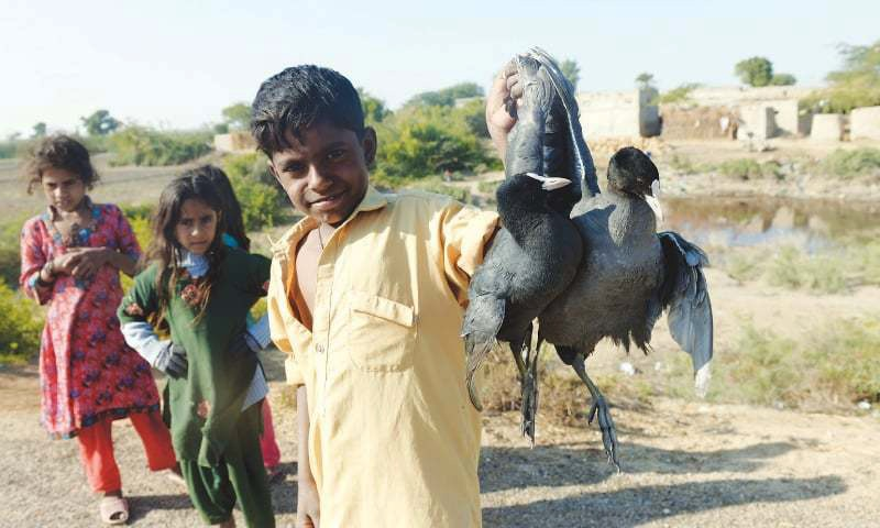 A boy sells a pair of coots, a migratory bird species, on the National Highway near the Keenjhar Lake.—Faheem Siddiqi/White Star